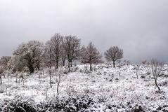 Snow in Sardinia Royalty Free Stock Photos