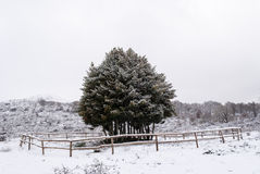 Snow in Sardinia Royalty Free Stock Images