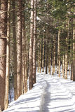 Snow-Scape. In a covered forest with snow in Korea Stock Images