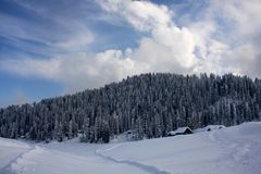 Snow-scape with Trees in Kashmir. Snow covered landscape in Gulmarg, Kashmir with trees, tracks, clouds Royalty Free Stock Image