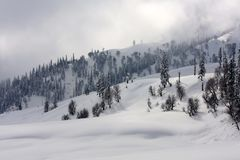 Snow-scape with Trees in Kashmir. A scene in winters of the snow covered mountain and trees in Kashmir, India Stock Images