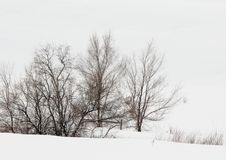 Snow Scape of Winter Trees. Snow scape of trees in a snow storm. Cold harsh winter season created a winter wonder land Stock Photos