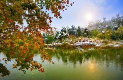 Snow scene. Pond and tree Royalty Free Stock Image