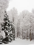 Snow scene. Stock Photos