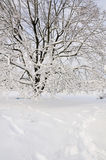 Snow Scene Royalty Free Stock Image