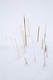 Snow scene. Some dry brown grass blades piercing the white snow Royalty Free Stock Photos