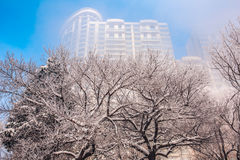 Snow scene Dense fog Rime Songhua River Royalty Free Stock Photography