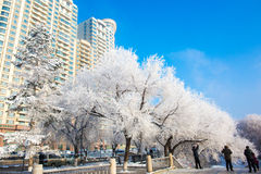 Snow scene Dense fog Rime Songhua River Stock Photos