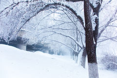 Snow scene Dense fog Rime Songhua River. IT`S A BEAUTIFUL PICTURE Royalty Free Stock Photography