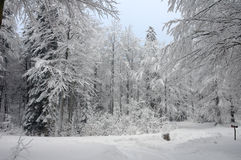 Snow scene in a forest Royalty Free Stock Photos