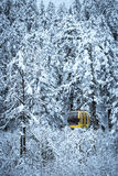 Snow scene of forest Royalty Free Stock Image