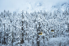 Snow scene of forest Royalty Free Stock Photo