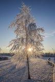 Snow scene frozen branches on tree. Frozen tree in low winter sunshine snow scene Stock Image