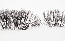 A Snow Scene Hedge Silhouette Royalty Free Stock Image