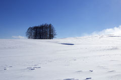 Free Snow Scene In Japan Royalty Free Stock Photography - 85241077