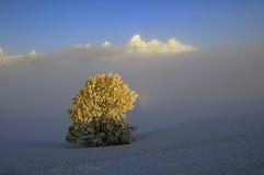 Snow scene with juniper tree Royalty Free Stock Photo
