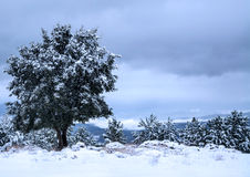 Snow scene Royalty Free Stock Photo