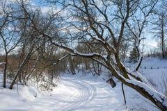 Snow Scene on Slate River stock images