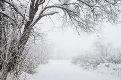 Snow scenery in field Royalty Free Stock Photography