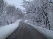 Snow scenes. Snow scape laden trees Stock Photos