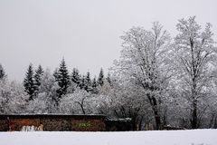 The Snow in Schwangau, Germany Royalty Free Stock Photo