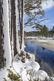 Snow on Scots Pine trees at Loch Mallachie in the Highlands of Scotland. Snow on Scots Pine trees at Loch Mallachie in the Cairngorms National Park of Scotland Stock Photo