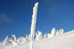 Snow sculptures. Winter snowy sculptures from trees on top of the mountain royalty free stock images