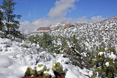 Snow in Sedona Stock Image