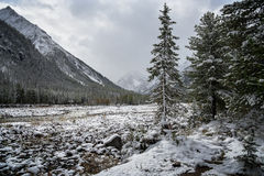 Snow in September Royalty Free Stock Images