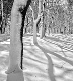 Snow Shadows. This wooded area was beautiful with the shadows that created an abstract Royalty Free Stock Photography