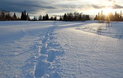 Snow shoe track at sunset Stock Photo