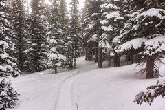 Snow Shoe Tracks near Brainerd Lake in Colorado Winter Forest Royalty Free Stock Photos