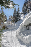 Snow Shoe Tracks Uphill in Colorado Mountains Stock Images