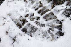 Snow shoe trail Royalty Free Stock Photography