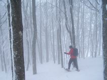 Snow shoeing Stock Image