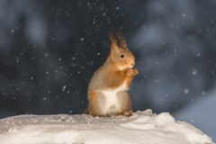 Snow shower Royalty Free Stock Photo