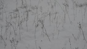 Snow and shrubs stock footage