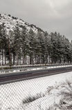 Snow in the Sierra Nevada mountains Royalty Free Stock Images