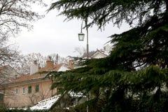 Snow in Sinj, Croatia. Pine tree in a garden, snow covering surrounding houses. Rural winter atmosphere in Sinj, Croatia. Selective focus stock photo