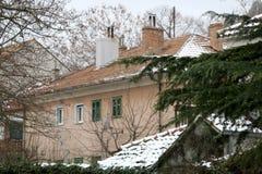 Snow in Sinj, Croatia. Pine tree in a garden, snow covering surrounding houses. Rural winter atmosphere in Sinj, Croatia. Selective focus royalty free stock photo