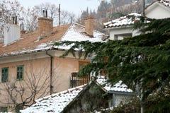 Snow in Sinj, Croatia. Pine tree in a garden, snow covering surrounding houses. Rural winter atmosphere in Sinj, Croatia. Selective stock image