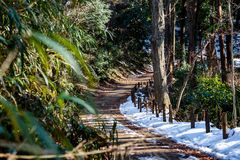 Snow along the hiking path. Snow sits along a hiking path in a public forest park in Zama, Japan Royalty Free Stock Image