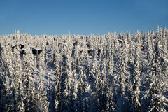 Snow covered vilage in winter forest Royalty Free Stock Photo