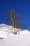 Snow, sky and tree Stock Photo
