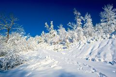 Snow and Sky, White and Blue. Fresh fallen snow on the ground and trees in the country after an overnight storm Royalty Free Stock Image