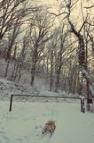 Snow sledge Stock Photos