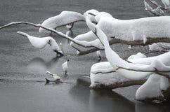 Snow slurpee royalty free stock image