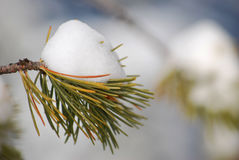 Snow on a small green branch in snowy mountains Royalty Free Stock Photos