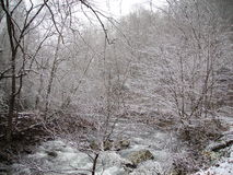Snow in the Smokies. As Fall moves over to let winter have it`s way, the snow begins to fall Stock Photos