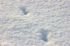 Snow snowbank on a Sunny day. Fluffy snow shimmers in the sun, abstract natural figures stock photography
